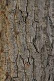 Tree Bark. Textured background image Stock Images
