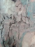 Tree bark textured background, nature landscape wallpaper. royalty free stock photos