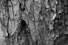 Tree bark textures in black and white Royalty Free Stock Image