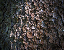 Tree bark, tree bark photo, bark photo, forest tree bark, tree t Stock Photos