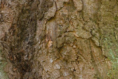 Tree bark trunk as background texture Royalty Free Stock Photo