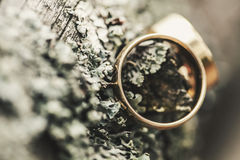 Tree bark and wedding rings Stock Photography