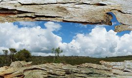 Tree Bark Window to Bushland Stock Photos