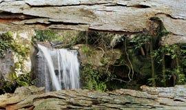 Tree Bark Window to Rain Forest Waterfall Stock Image