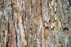 Tree Bark. Wood Background brown and orange tree bark Stock Image