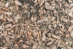 Tree bark wood chip. royalty free stock image