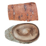 Tree Bark and Wood Slice. Set of 2 Slices of Wood with Bark Stock Images