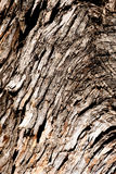 Tree bark. Wood texture Royalty Free Stock Photo