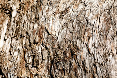 Tree bark. Wood texture Stock Photo
