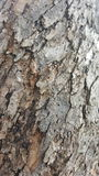 Tree bark / wood texture. Abstract texture. / wallpaper Royalty Free Stock Photos