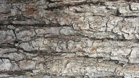 Tree bark / wood texture. Abstract texture. / wallpaper Stock Photos