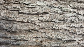 Tree bark / wood texture. Abstract texture. / wallpaper Stock Images
