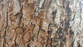 Tree bark / wood texture. Abstract texture. / wallpaper Stock Image