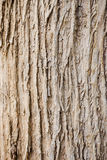 Tree bark wood texture and background Royalty Free Stock Photography