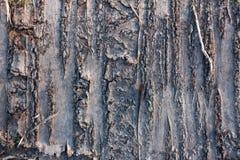 Tree bark wooden background Stock Photos