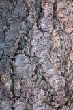 Tree bark wooden background Stock Photo