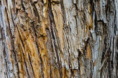 Tree bark wooden texture for background Royalty Free Stock Photography