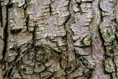 Tree Bark in the Woods royalty free stock photo