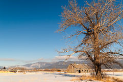 Tree with Barn Royalty Free Stock Photos