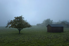 Tree and Barn in Fog Royalty Free Stock Photography