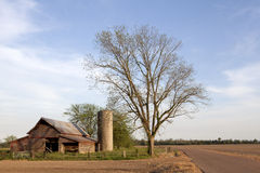 A tree and barn, Mississppi. A large tree next to a road and a wooden barn, Clarkesdale, Mississippi Stock Photo