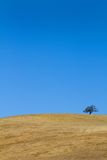 Tree On Barren Hillside Stock Photo