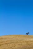 Tree On Barren Hillside Stock Photo