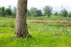 Tree base with green grass,copy space Royalty Free Stock Image