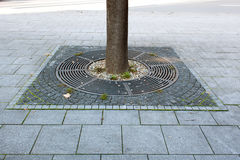 Tree base and pavement. At the base of every tree lining  in Pancevo, Serbia Royalty Free Stock Photo