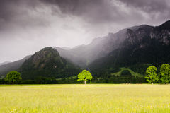 The tree in Bavaria, Germany. It's located near Neuschwanstein and Hoshenschwangau castles.  Stock Photos