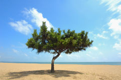 Tree on beach Stock Photo