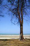 A Tree by the Beach. View of a branch cut and leaning at a tree by the beach Stock Images