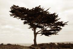 Tree on the beach Stock Photography