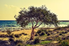 Tree on beach Royalty Free Stock Photography