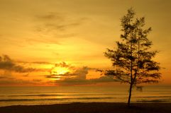 Tree by the beach stock photography
