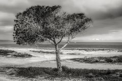 Tree on Beach Against Sky Stock Photography