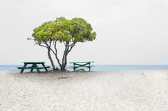 Tree, beach and benches by the seas Stock Photo
