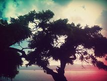 Tree at the beach. Big tree in the beach with editing colors Royalty Free Stock Images