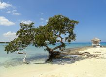 Tree and beach. Tree at the edge of beatiful cuban beach at north coast of the island Stock Photography