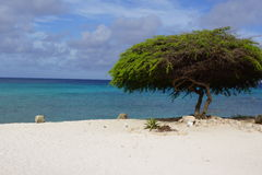 Tree on the beach. A tree that gives shade on a lonely beach with a blue sea and white sand Stock Images