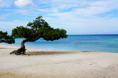 Tree on the beach. A tree that gives shade on a secluded beach somewhere in the tropics with a blue sea and white sand Royalty Free Stock Photography