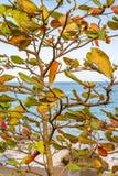 Tree and Beach in Grenada, Caribbean Stock Photo