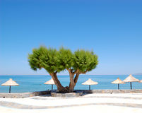 Tree on the beach at luxury hotel Stock Photo