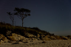 Tree on beach at night Royalty Free Stock Image