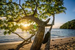 Tree Beach Ocean Sea Coast Stock Images