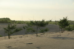 Tree on the beach. Tree on Parangkusumo Beach yogyakarta royalty free stock images