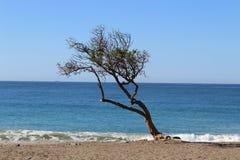 Tree on the beach. A tree on the beach in Point Mugu, Malibu, CA Stock Photo