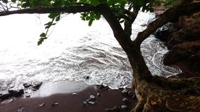 Tree in a beach with red sand Royalty Free Stock Images