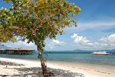 Tree On A Beach Resort Stock Images