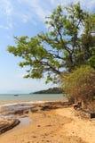 Tree on beach sand sea boat in Buzios, Rio de Janeiro Stock Photo